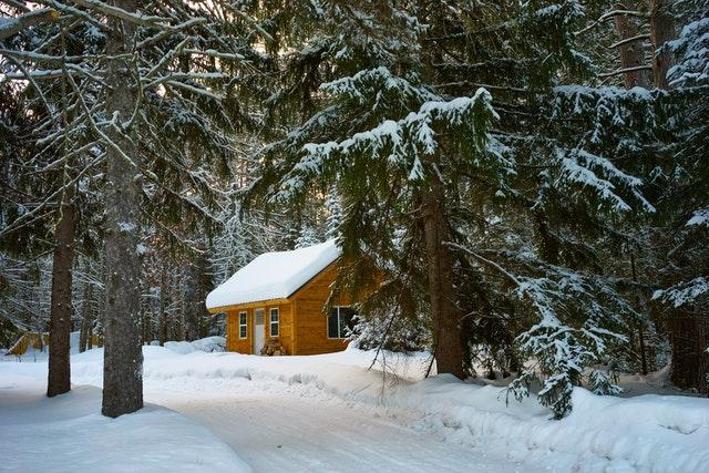 dřevěná chata v lese
